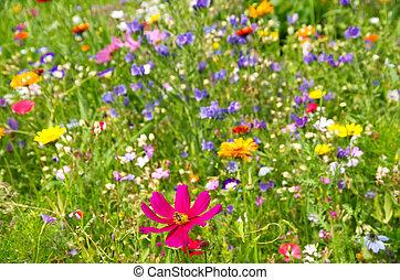 blomma, äng