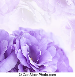 blomma, bakgrund, purpur, lisianthus