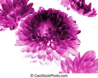 blomma, bakgrund