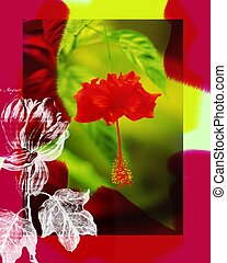 blomma, blossum., röd
