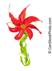 blomma, färgad, isolerat, stänk, gjord, bakgrund, vit