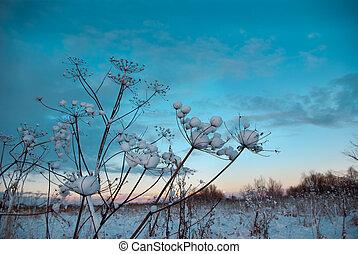 blomma, .frozenned, vinter scen
