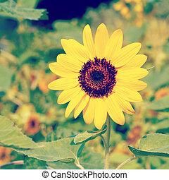 blomma, gammal, årgång, retro designa