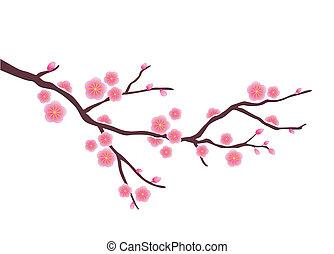 blomma, körsbär