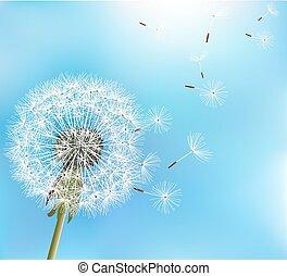 blomma, maskros, på, blåttbakgrund