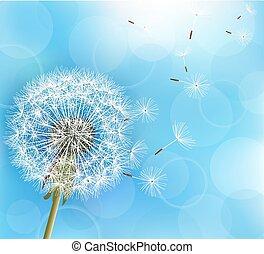 blomma, maskros, på, dager blå fond