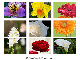 blomma, montage