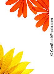 blomma, naturlig, vit, details., tom, dekorerat, sida