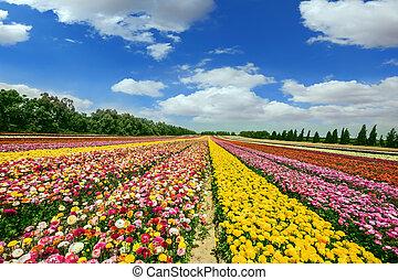 blomma, på, den, gräns, med, gaza remsa