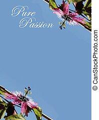 blomma, passion, inbjudan