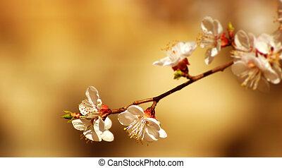 blomma, träd