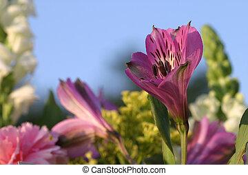 blomma, trädgård