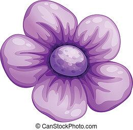 blomma, violett