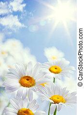 blommig, årgång, abstrakt, bakgrund, sommar