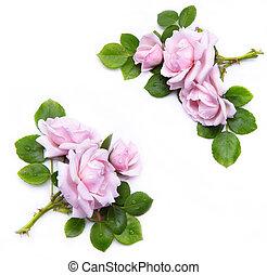 blommig, bakgrund, abstrakt, isolerat, ram, vit