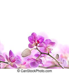 blommig, bakgrund, av, tropisk, orkidéer