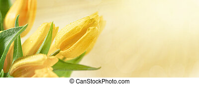 blommig, bakgrund, med, gul tulpan, blomningen
