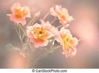 blommig, bakgrund, med, ro, blomningen