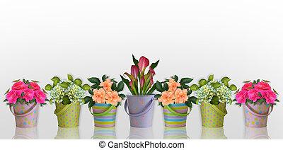 blommig, blomningen, gräns, behållare, färgrik