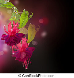 blommig, Blomstrar,  fuchsia, abstrakt, bakgrund