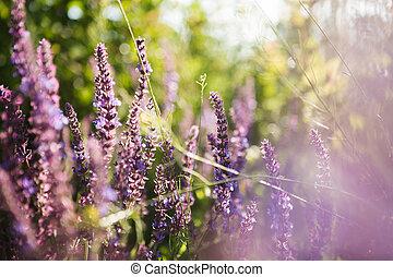 blommig, lavendel, bakgrund