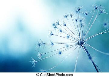 blommig, makro, naturlig, bakgrund