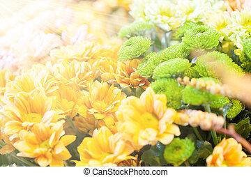 blommig, sol, förbluffande, stråle, bakgrund