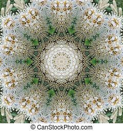 blommig, vit, mandala