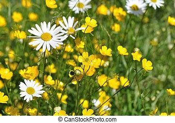 blomning, grässlätt