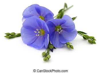 blomningen, av, lin