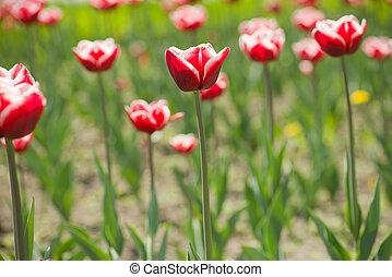 blomningen