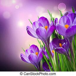 blomningen, fjäder, krokus