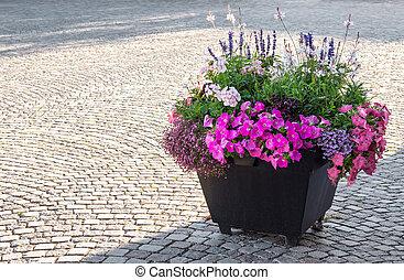 blomningen, inred, a, stad, fyrkant