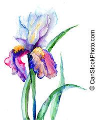 blomningen, iris