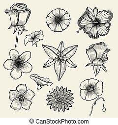 blomningen, sätta, hand, oavgjord