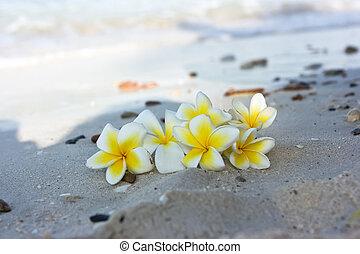 blomningen, strand