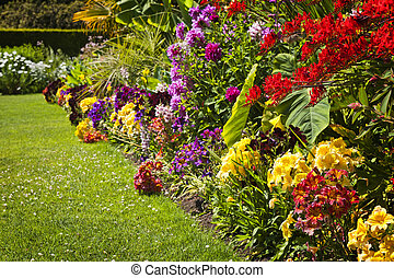 blomningen, trädgård, färgrik