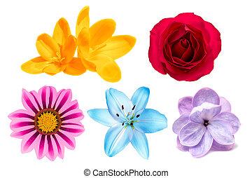 blomningen, vit, sätta, isolerat, bakgrund
