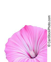 blomst, card, konstruktion, på hvide, baggrund