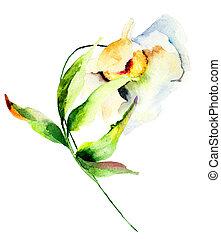 blomst, ornamental, hvid
