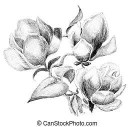 blomst, skitse, bouquet