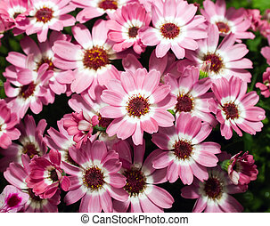 blomster, baggrund