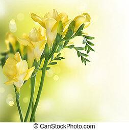 blomster, freesia