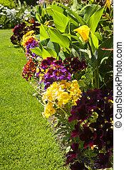 blomster, have, farverig