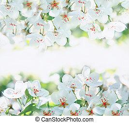 blomster, i, den, kirsebær blomstrer, på, en, forår, dag