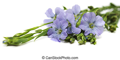 blomster, i, flax