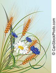 blomster, og, ører, i, hvede