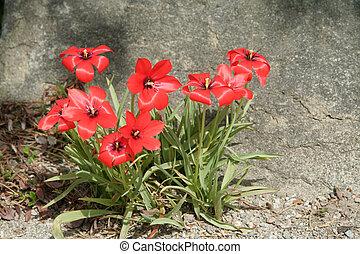 blomster, rød