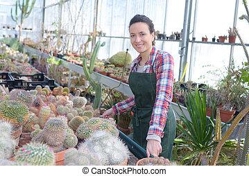 blomsterhandlare, kvinnlig, växthus, arbete