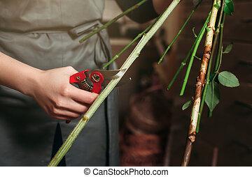 blomsterhandlare, räcker, klippande, blomma, stalk